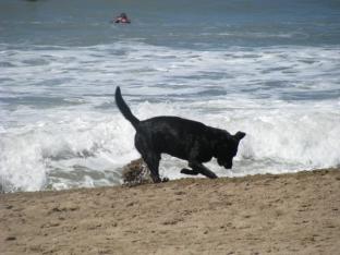Perro al agua